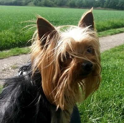 Borreliose-beim-Hund Chart