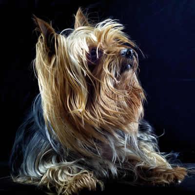 Borreliose-beim-Hund