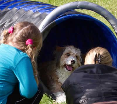 Neosporose-beim-Hund-Platz